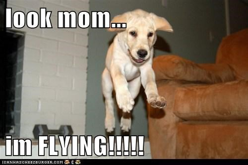look mom...  im FLYING!!!!!