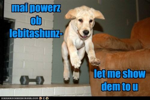 awesome,hover dog,labrador retriever,levitating,levitation