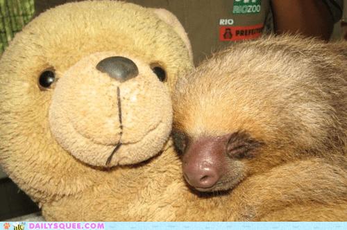 asleep,blending in,camouflage,color,cuddles,cuddling,nap,napping,resemblance,similar sleeping,sloth,stuffed animal