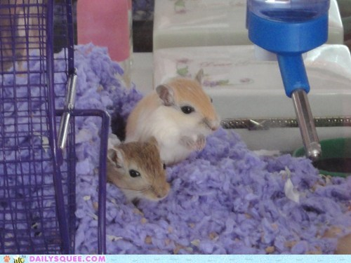 Reader Squees: Itty Bitty Baby Gerbils