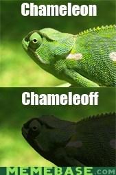 boy george,chameleon,karma,Memes,off,play on words