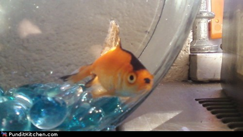 Friday Picspam: Fishy Resemblances
