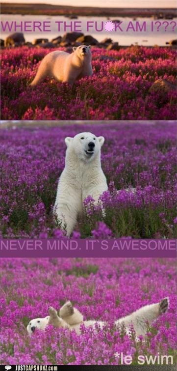 amazing,animals,awesome,flowers,le swim,nevermind,polar bear,swim,what am i doing here,what,where am i,wildflowers