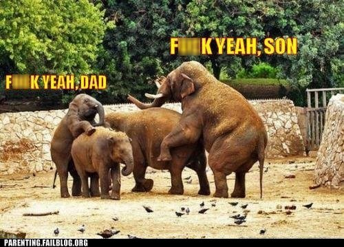 elephants,f yeah dad,f yeah son,getting it on