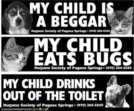 beggars,begging,bugs,bumper stickers,cars,clever,decals,dogs,humane society,pagosa springs,toilets