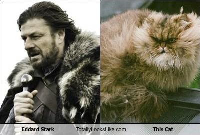 Eddard Stark Totally Looks Like This Cat