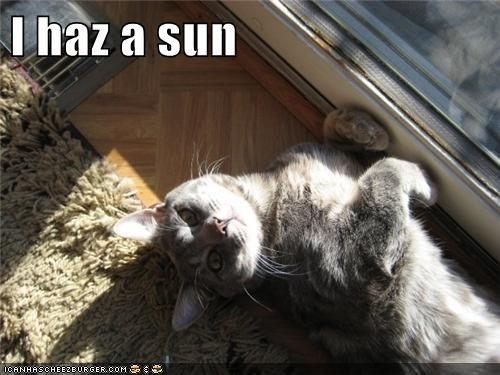 I haz a sun