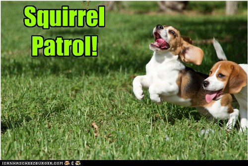 SquirrelPatrol!