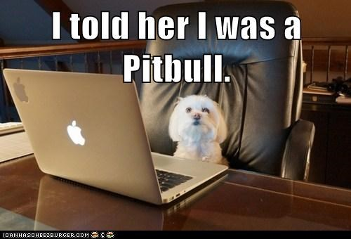 I told her I was a Pitbull.