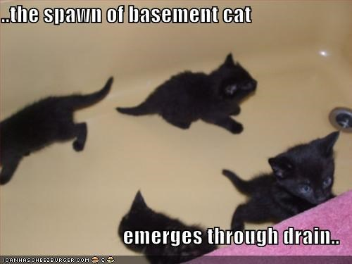 ..the spawn of basement cat  emerges through drain..