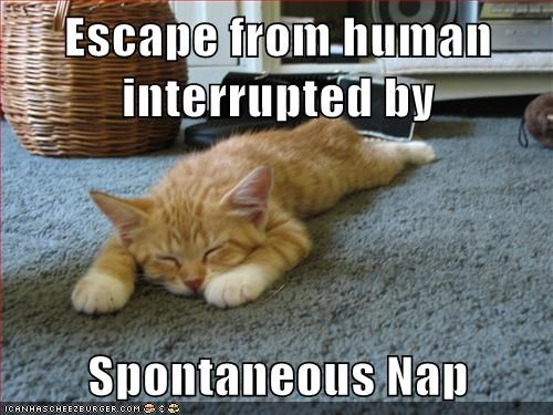 Escape from human interrupted by  Spontaneous Nap