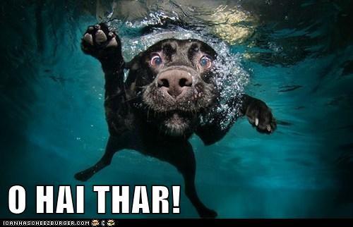 O HAI THAR!