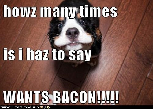 howz many times is i haz to say WANTS BACON!!!!!