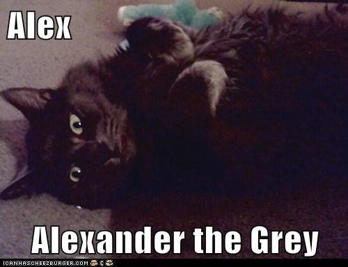 Alex  Alexander the Grey