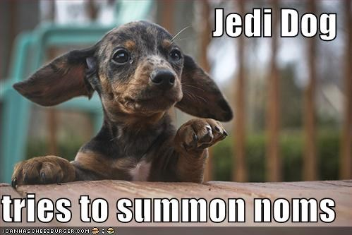 Jedi Dog  tries to summon noms
