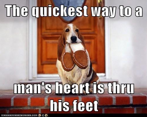 basset hound,heart,love,slippers