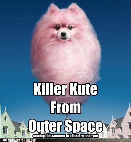 caption contest,cotton candy,cute,killer klowns,killer kute,outer space,photoshopped,pomeranian,what