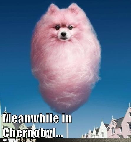 caption contest,cotton candy,meanwhile in,meanwhile in Chernobyl,photoshopped,pomeranian,what