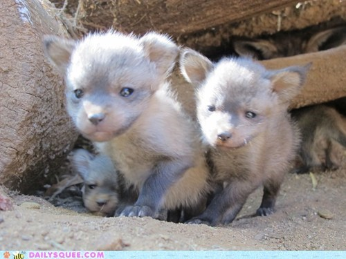Squee Spree: Itty Bitty Bat-Eared Fox Friends!