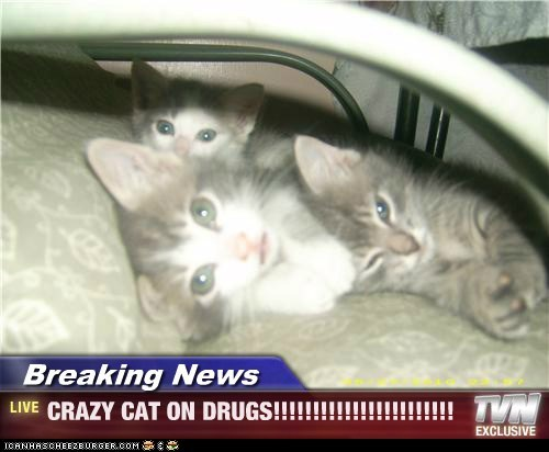 Breaking News - CRAZY CAT ON DRUGS!!!!!!!!!!!!!!!!!!!!!!!