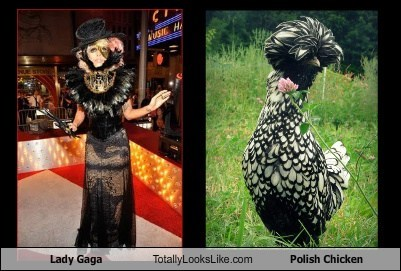 Lady Gaga Totally Looks Like Polish Chicken