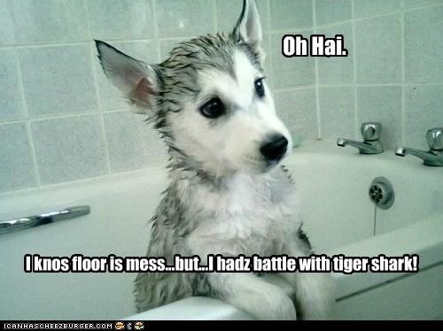 bath,bath time,husky,shark,tiger shark,water,wet