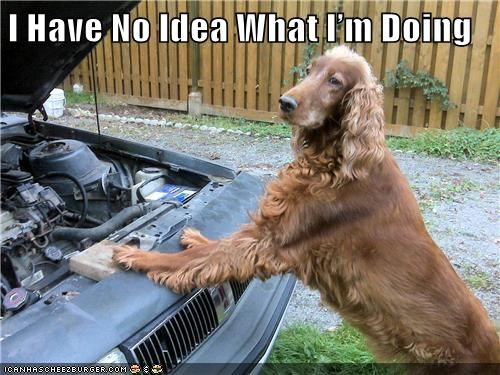 car,i have no idea what im doing,irish setter,mechanic
