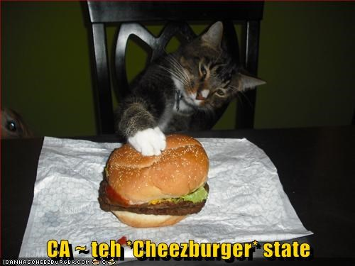 CA ~ teh *Cheezburger* state