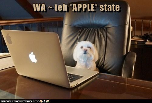 WA ~ teh *APPLE* state