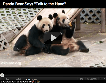 "Around the Interwebs: Panda Says ""Talk to the Hand!"" (VIDEO)"