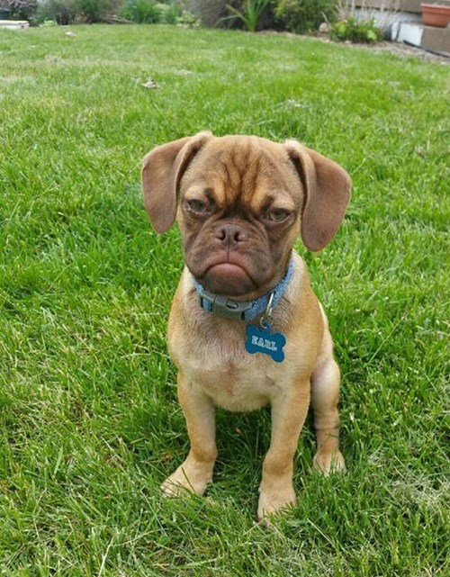 Ten Reasons Why Earl the Grumpy Puppy is Having a Worse Day Than You