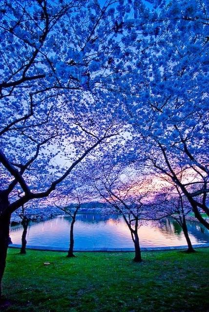 blue,flowers,getaways,trees,unknown location,vivid colors