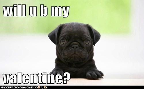 will u b my  valentine?