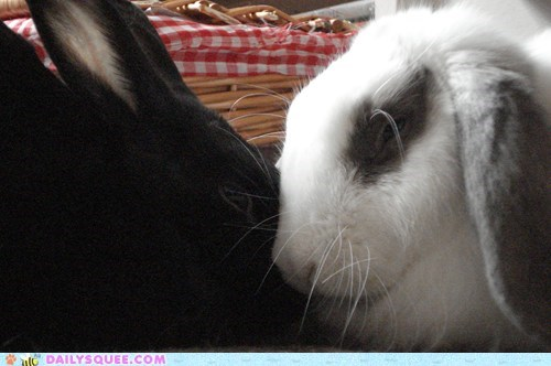 Snugglebuns Anonymous