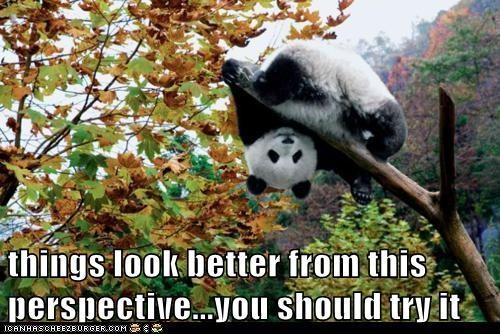 panda,panda bear,perspective,silly,upside down