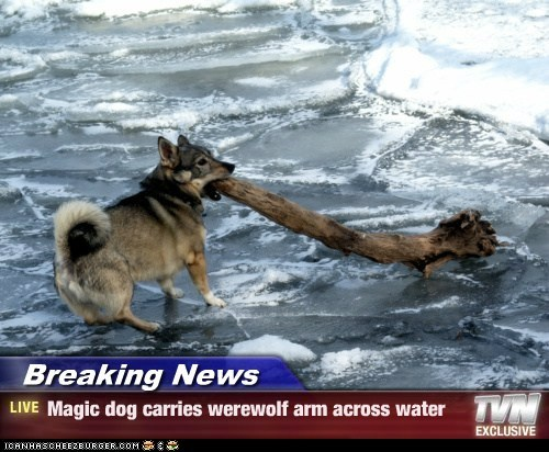 Breaking News - Magic dog carries werewolf arm across water