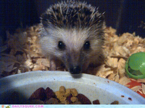 baby,cuddly,hedgehog,outside,prickly,reader squees,tiny,unbearably squee
