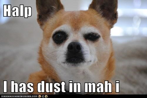 Halp   I has dust in mah i