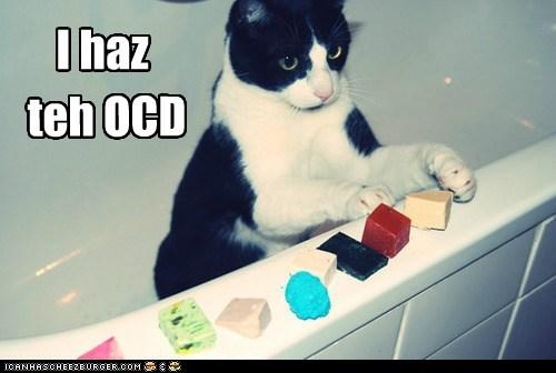 arranging,caption,captioned,cat,i has,ocd
