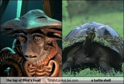 the top of Pilot's head Totally Looks Like a turtle shell