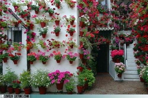 exterior,geraniums,outdoors,plants,pots