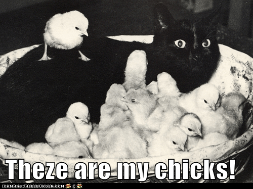 Theze are my chicks!