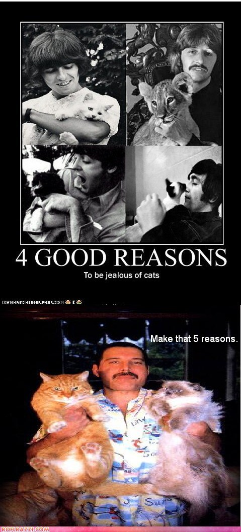 cat,celeb,demotivational,freddie mercury,funny,Music,the Beatles