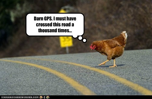 bird,birds,broken,chicken,chicken crossing the road,gps,oops
