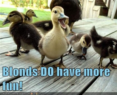 adorable,blonde,blonde hair,blondes have more fun,duck,duckling,ducklings