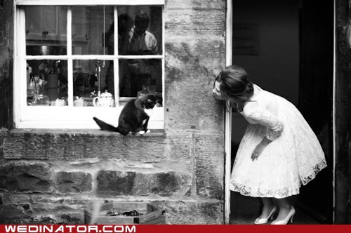 bride,Cats,funny wedding photos,kittehs