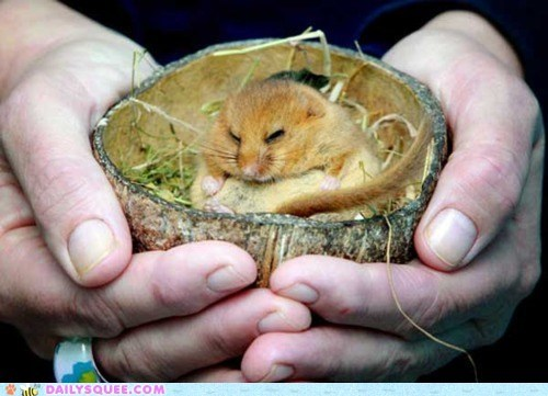 Put the Dormouse in the Coconut...