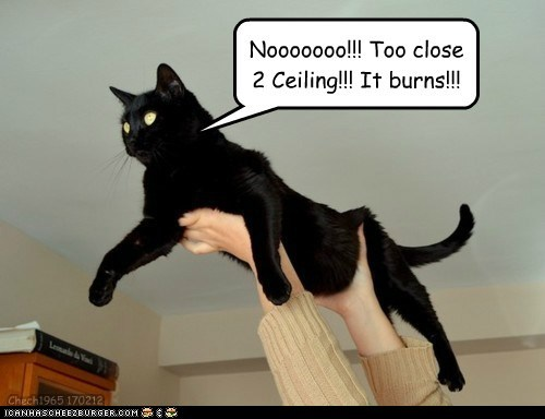 airborne,basement cat,burns,caption,captioned,cat,ceiling,close,do not want,holding,suspended,too