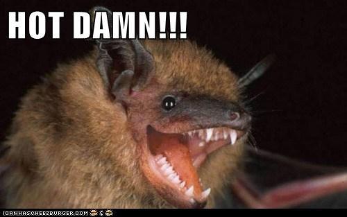 bat,hot,hot damn,lookin-good