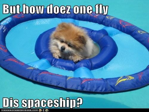 floating,how,pomeranian,pool,spaceship,swimming
